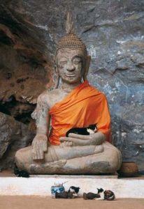 Buddha-Cats-4