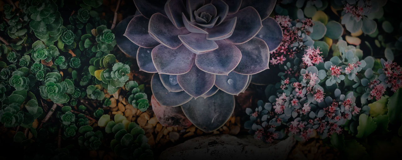 Succulents Background